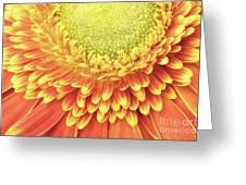 Daisy Day Greeting Card
