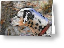 Dalmatian Dog Greeting Card