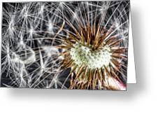 Dandelion Seed Pod Greeting Card