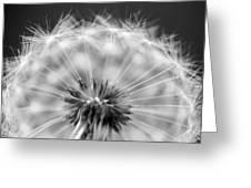 Dandelion Seeds Pod Macro Greeting Card