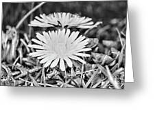 Dandelion Up Close And Personal Black And White Greeting Card