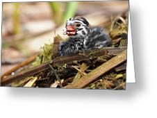 Dapper Dive-dapper Greeting Card
