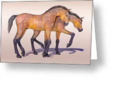 Darling Foal Pair Greeting Card