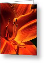 Day Lily Delight Greeting Card