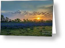 Daybreak In The Land Of Bluebonnets Greeting Card