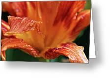 Daylily Dewdrops Greeting Card