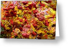 Days Of Autumn 18 Greeting Card