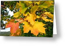 Days Of Autumn 24 Greeting Card
