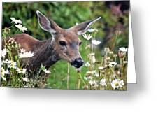 Deer In Daisies Greeting Card