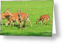 Deer Looking At You Greeting Card