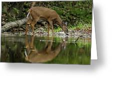 Deer Reflection Greeting Card by Dan Sproul