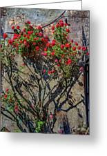 della Rocca Rose Greeting Card