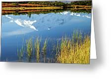 Denali Reflection Greeting Card by Tim Newton