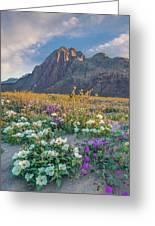 Desert Sand Verbena, Desert Sunflower Greeting Card