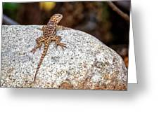 Desert Spiny Lizard H1809 Greeting Card by Mark Myhaver
