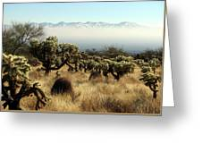 Desert Winter 1 Greeting Card
