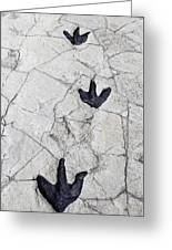 Detail Of Dinosaur Tracks In Spain Greeting Card