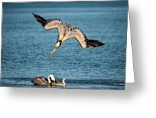 Dive Bomber Greeting Card by Jeff Phillippi