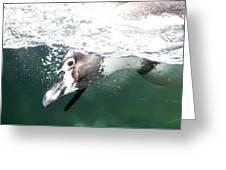 Dive Penguin Dive Greeting Card