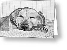 Django Napping Greeting Card