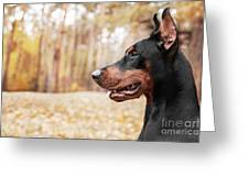 Doberman Pinscher On The Background Of Greeting Card