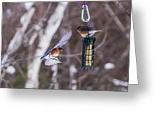 Docking Bluebird Greeting Card