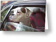 Dog In A Car Greeting Card