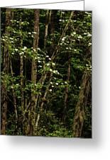 Dogwood Tree 2 Greeting Card