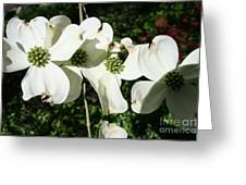 Dogwood V 2019 Greeting Card