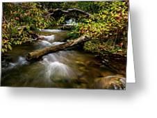 Dogwoods Along The Provo Deer Creek Greeting Card