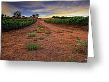 Domaine Vineyards Greeting Card