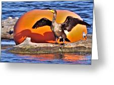Double Crested Cormorant    Drying Wings         September        Indiana Greeting Card