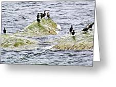 Double-crested Cormorants In Cap-bon-ami In  Forillon National Park, Quebec Greeting Card by Ruth Hager