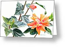 Double Orange Hibiscus With Buds Greeting Card