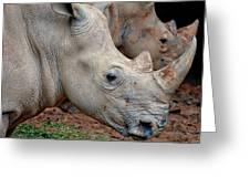 Double Rhino Greeting Card