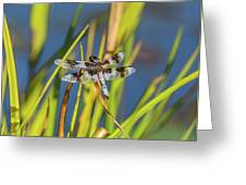 Dragonfly Perched By Pond Greeting Card