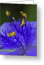 Dressed In Blue Jackets #2 Greeting Card