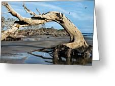 Driftwood Beach Greeting Card