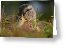 Duck 1 Greeting Card