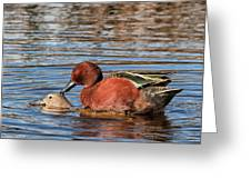 Ducky Delight Greeting Card