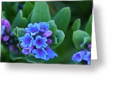 Dwarf Bluebell Detail Greeting Card