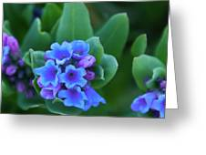 Dwarf Bluebell Detail Greeting Card