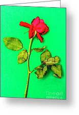 Dying Flower Against A Green Background Greeting Card