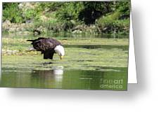 Eagle's Drink Greeting Card