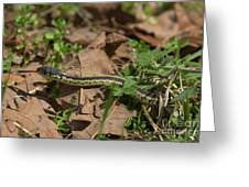 Eastern Garter Snake - 9167 Greeting Card