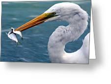 Egret Feeding  Greeting Card