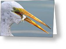 Egret Finishing Lunch  Greeting Card