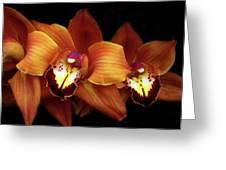 Orange Cimbidium Orchid Greeting Card