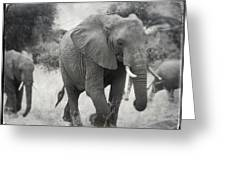 Elephant And Babies Greeting Card