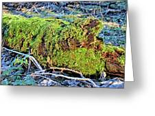 Emerald Tree Greeting Card